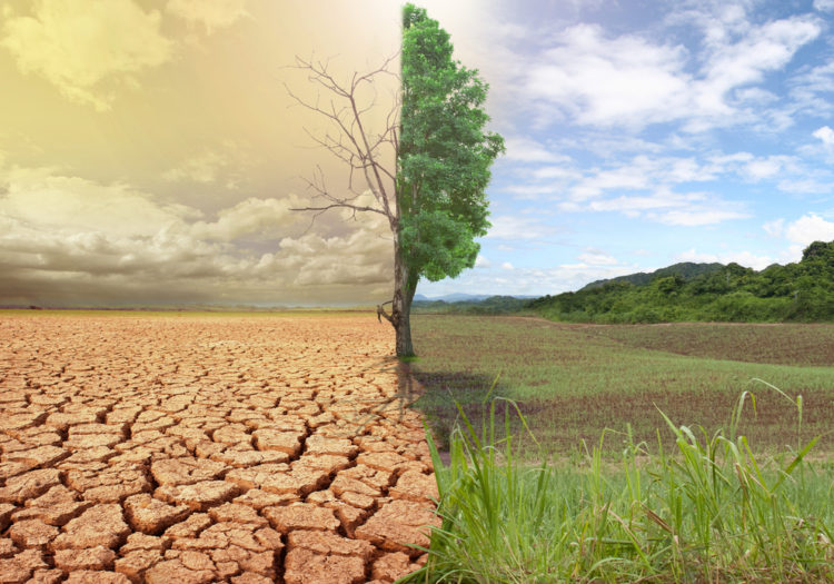 June 17 World Day To Combat Desertification And Drought